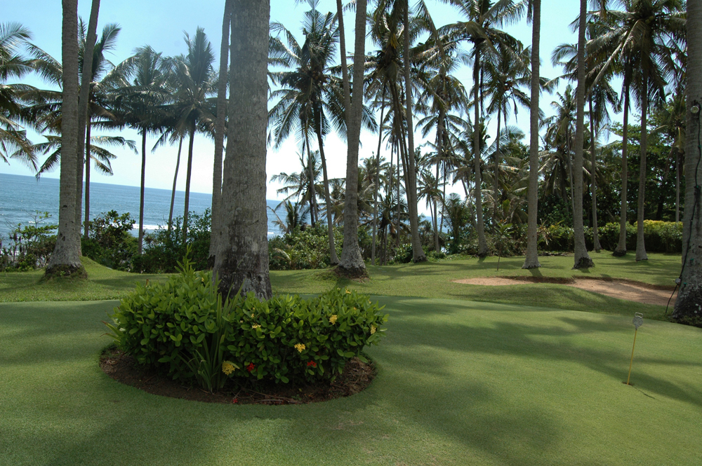 The Golf putting greens amongst the palm trees.